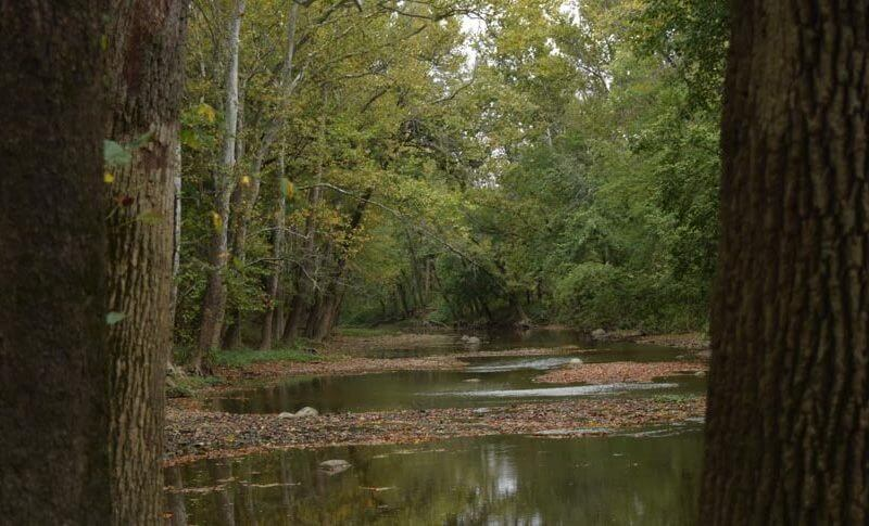 forest preserve river