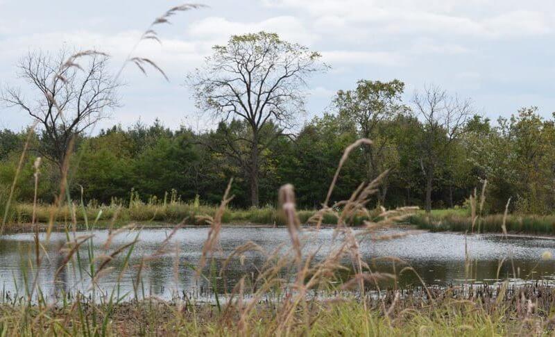 mcvey memorial forest